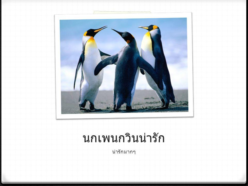 นกเพนกวินน่ารัก น่ารักมากๆ