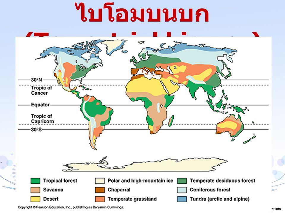ไบโอมบนบก (Terrestrial biomes)
