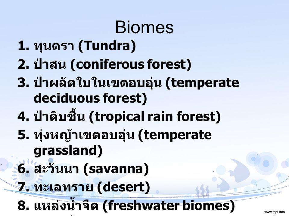 Biomes ทุนดรา (Tundra) ป่าสน (coniferous forest)