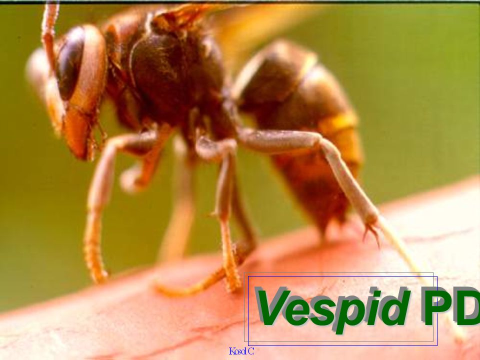 Vespid PDD