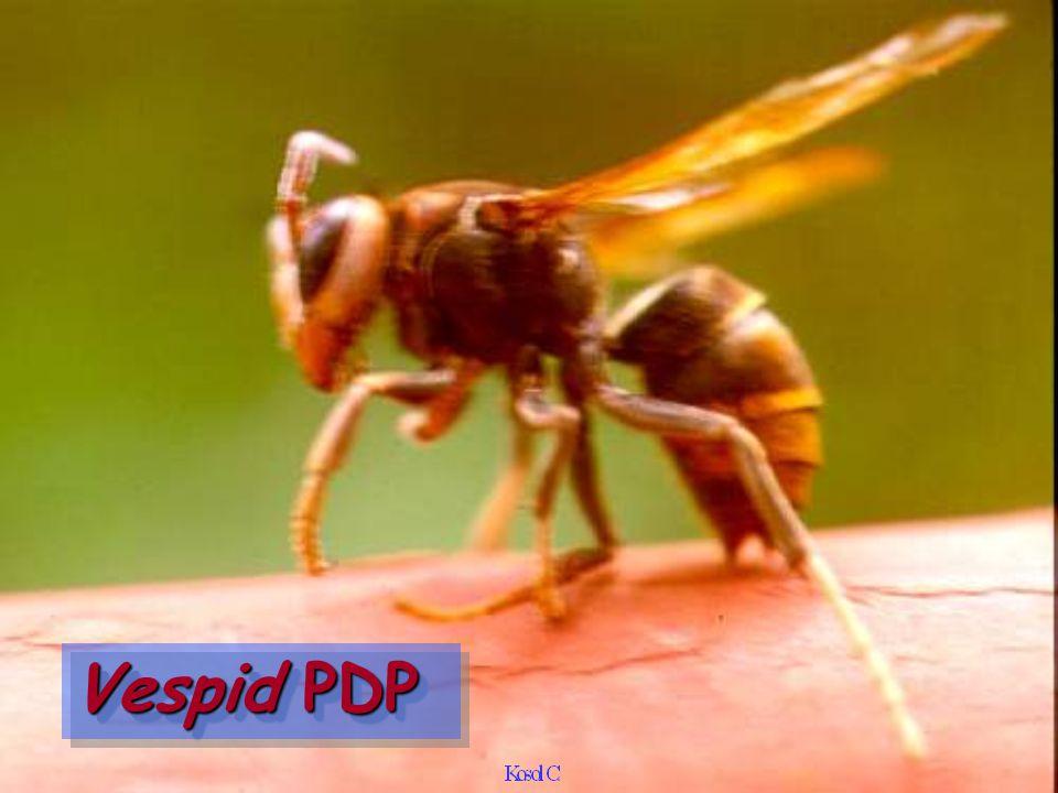 Vespid PDP