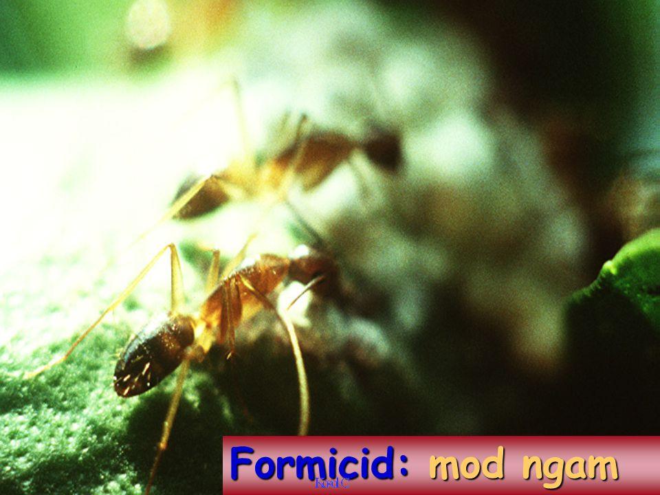 Formicid: mod ngam
