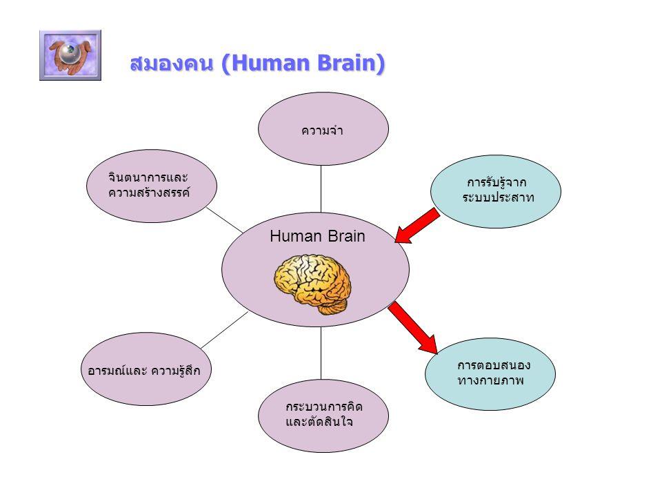 สมองคน (Human Brain) Human Brain ความจำ จินตนาการและความสร้างสรรค์