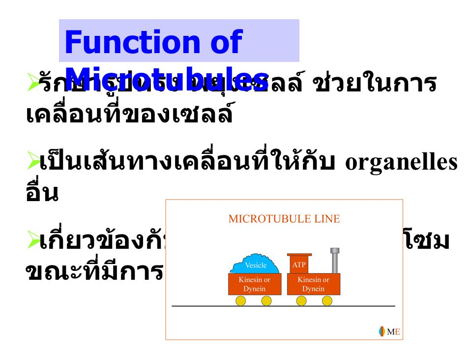 Function of Microtubules