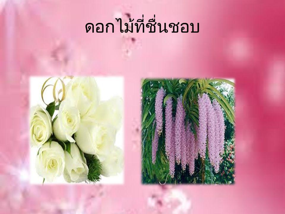 ดอกไม้ที่ชื่นชอบ
