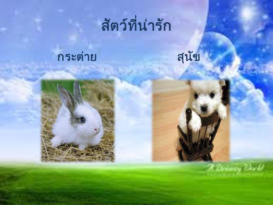 สัตว์ที่น่ารัก กระต่าย สุนัข