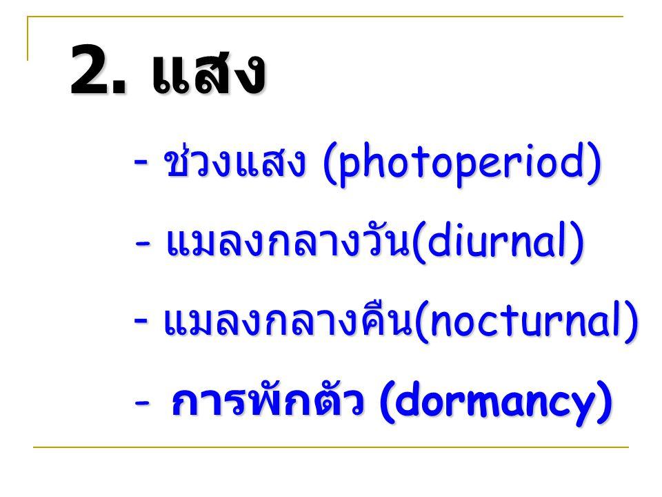 2. แสง - ช่วงแสง (photoperiod) - แมลงกลางวัน(diurnal)