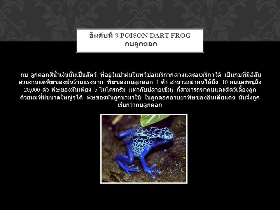 อันดับที่ 9 Poison Dart Frog กบลูกดอก