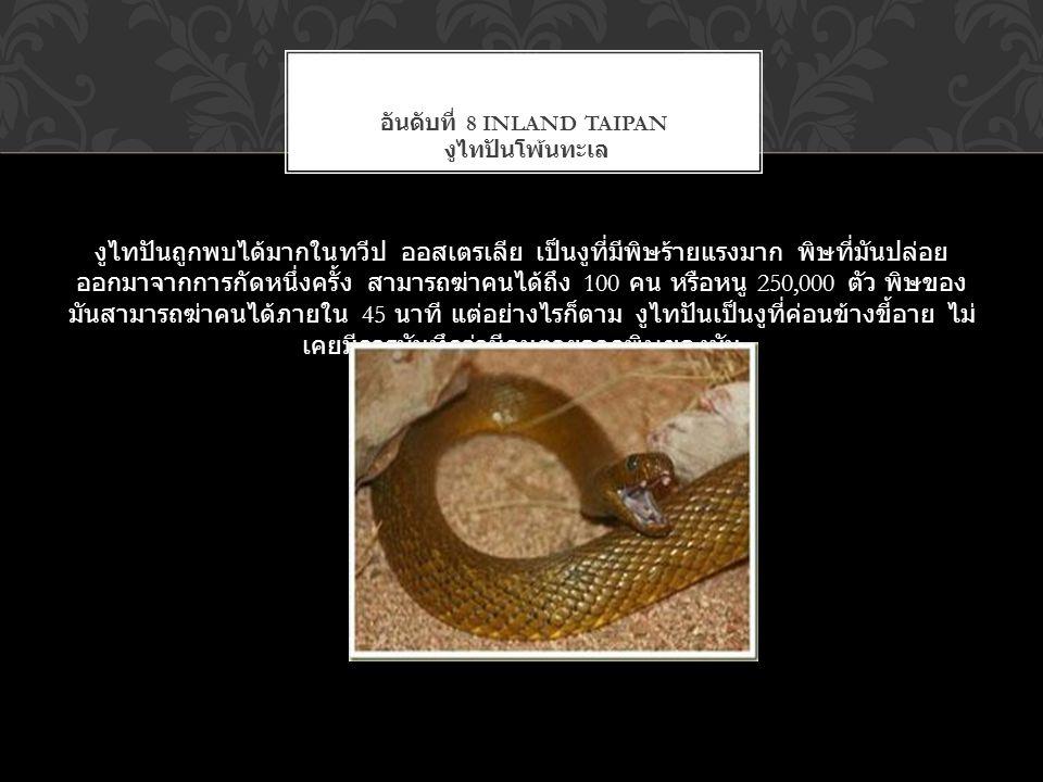 อันดับที่ 8 Inland Taipan งูไทปันโพ้นทะเล