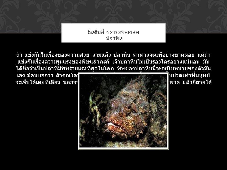 อันดับที่ 6 Stonefish ปลาหิน