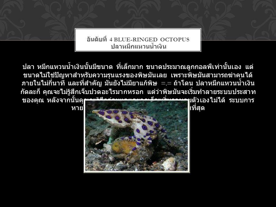 อันดับที่ 4 Blue-Ringed Octopus ปลาหมึกแหวนน้ำเงิน