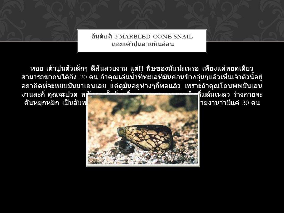 อันดับที่ 3 Marbled Cone Snail หอยเต้าปูนลายหินอ่อน