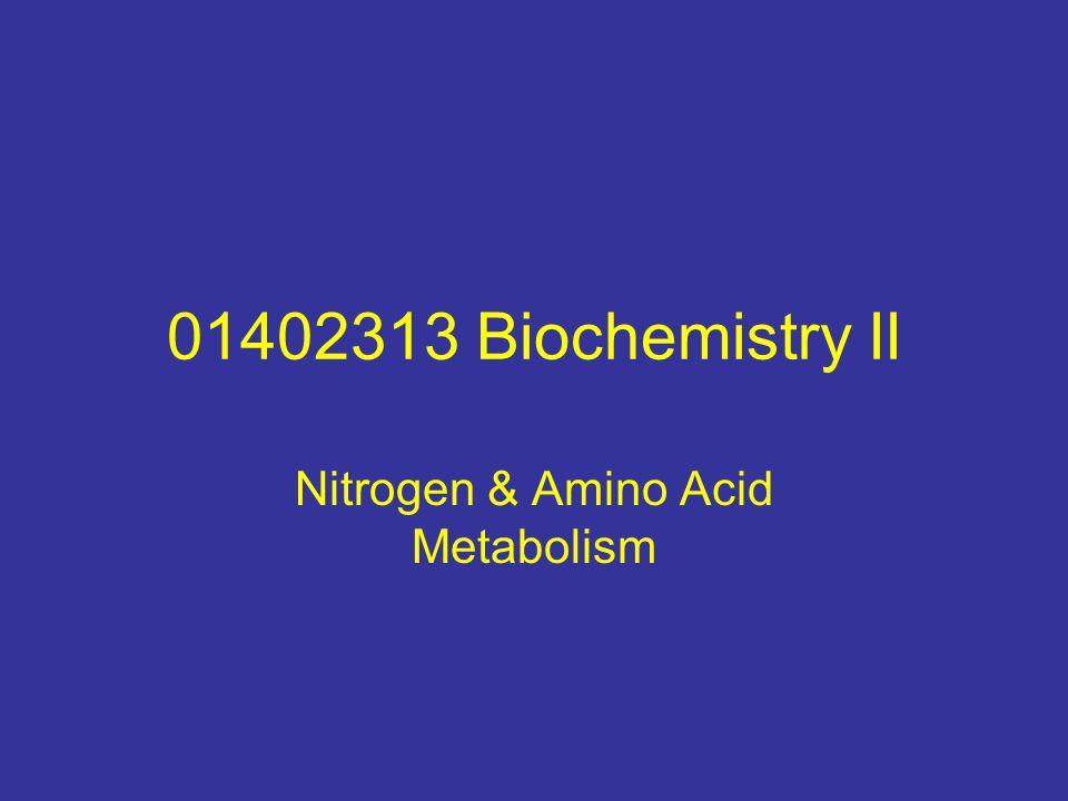 Nitrogen & Amino Acid Metabolism