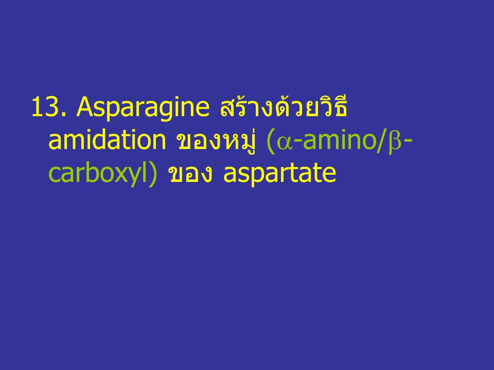 13. Asparagine สร้างด้วยวิธี amidation ของหมู่ (-amino/-carboxyl) ของ aspartate