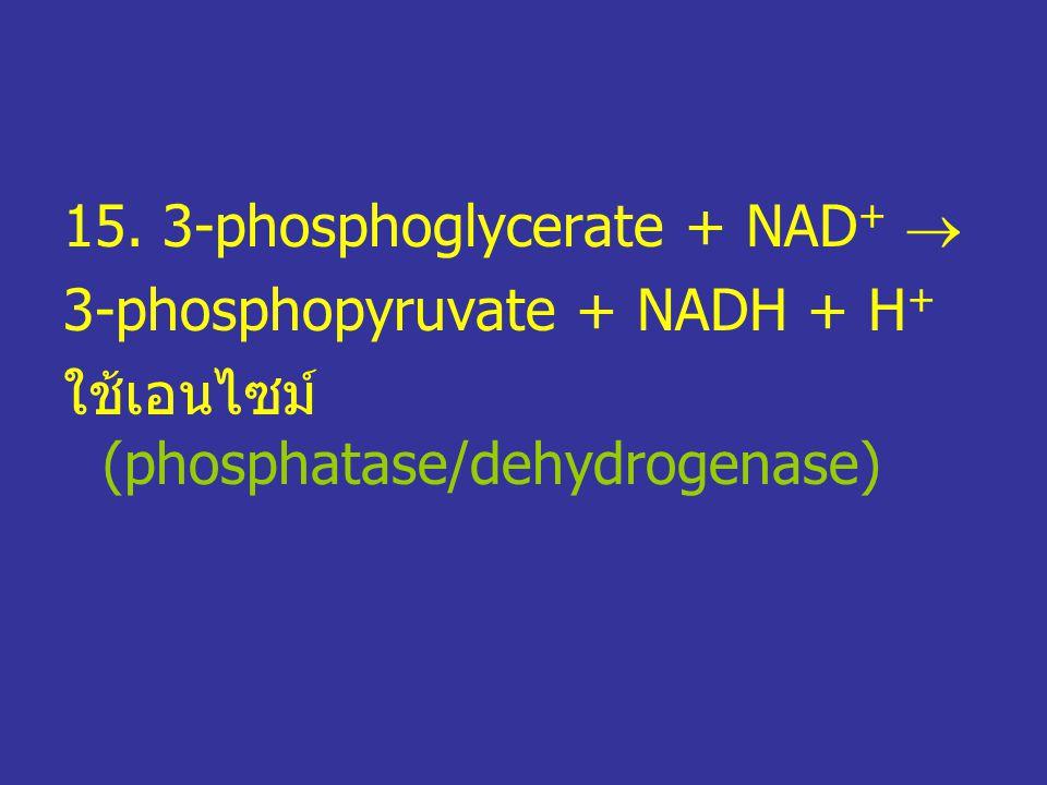 15. 3-phosphoglycerate + NAD+ 