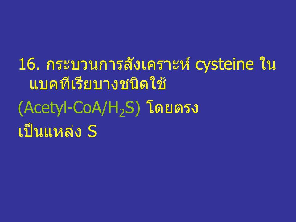 16. กระบวนการสังเคราะห์ cysteine ในแบคทีเรียบางชนิดใช้