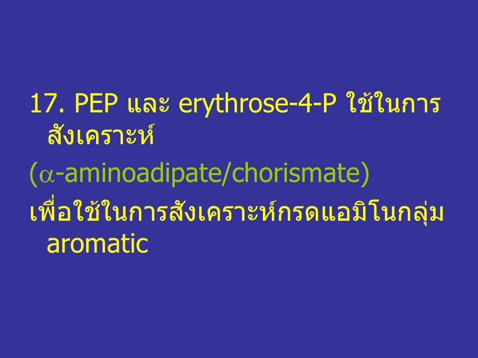 17. PEP และ erythrose-4-P ใช้ในการสังเคราะห์