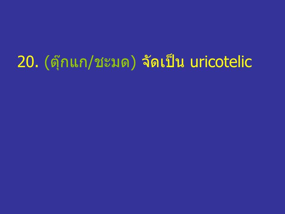 20. (ตุ๊กแก/ชะมด) จัดเป็น uricotelic