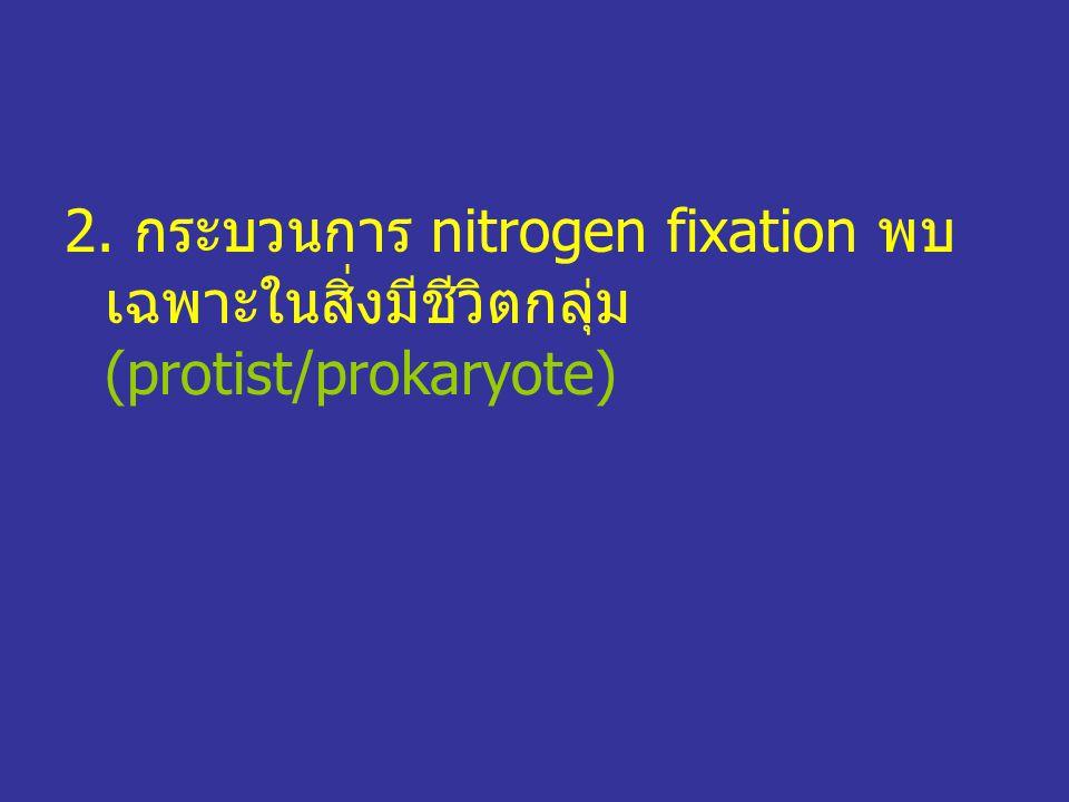 2. กระบวนการ nitrogen fixation พบเฉพาะในสิ่งมีชีวิตกลุ่ม (protist/prokaryote)