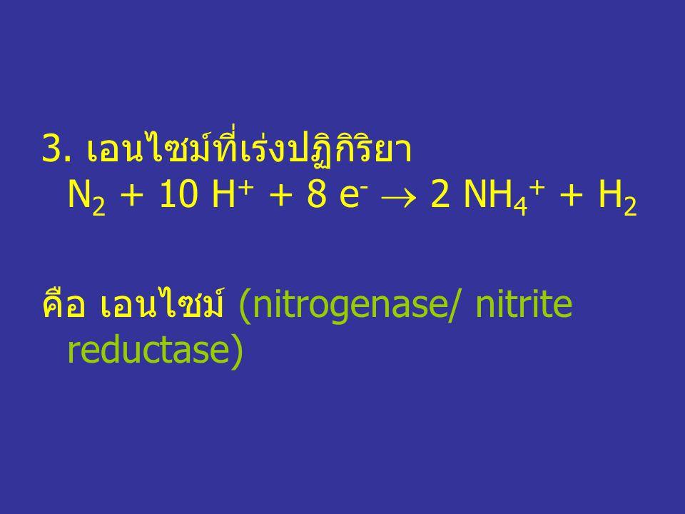 3. เอนไซม์ที่เร่งปฏิกิริยา N2 + 10 H+ + 8 e-  2 NH4+ + H2