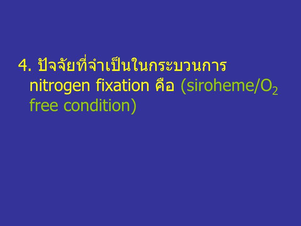 4. ปัจจัยที่จำเป็นในกระบวนการ nitrogen fixation คือ (siroheme/O2 free condition)