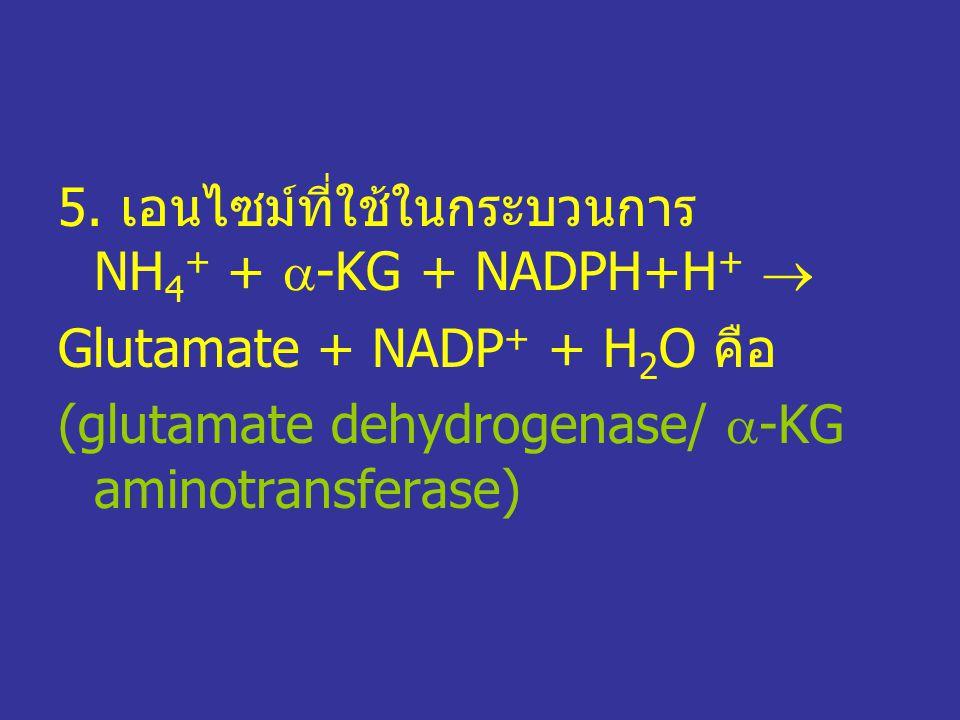 5. เอนไซม์ที่ใช้ในกระบวนการ NH4+ + -KG + NADPH+H+ 