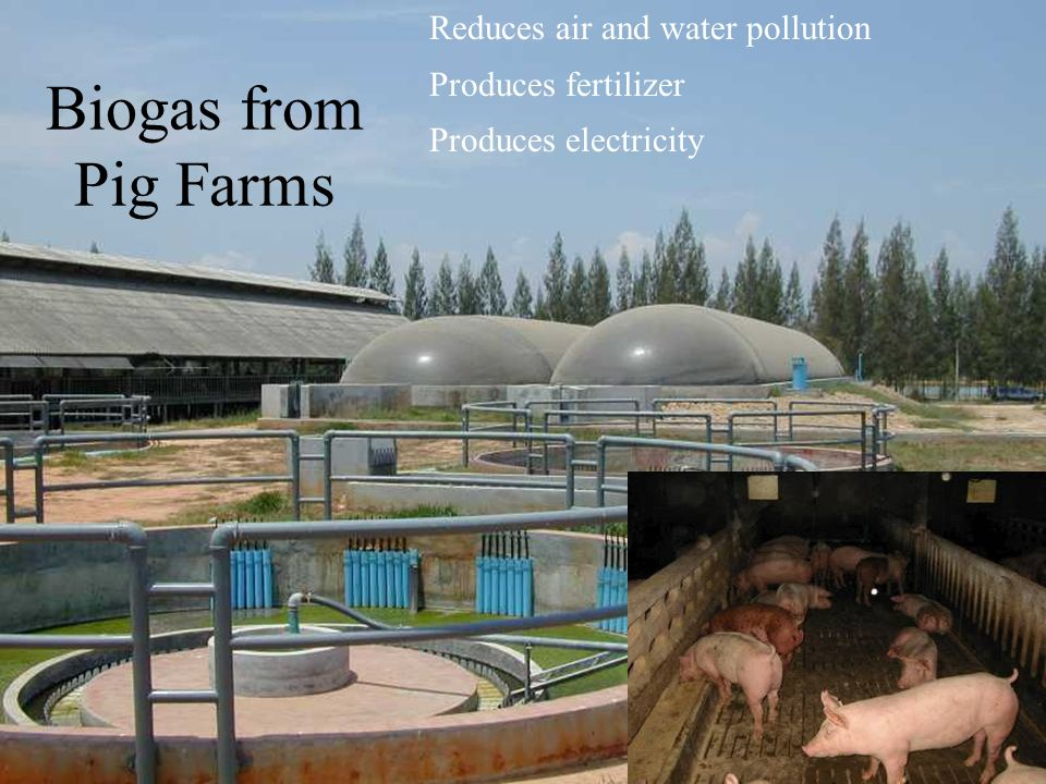 Biogas from Pig Farms Reduces air and water pollution