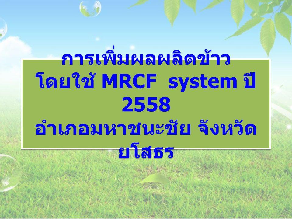 การเพิ่มผลผลิตข้าว โดยใช้ MRCF system ปี 2558 อำเภอมหาชนะชัย จังหวัดยโสธร
