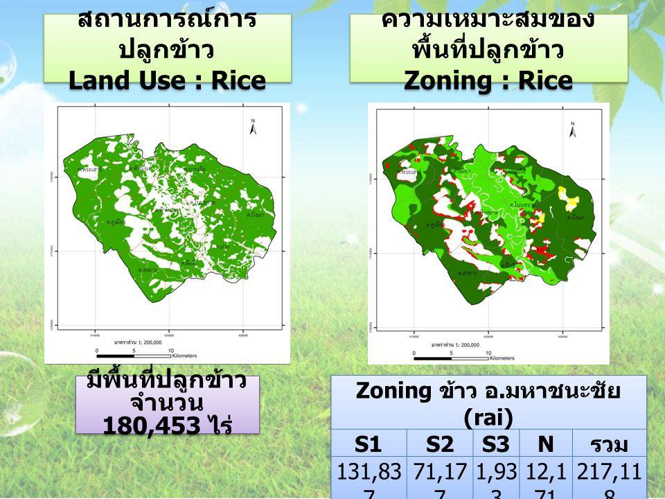 สถานการณ์การปลูกข้าว Land Use : Rice