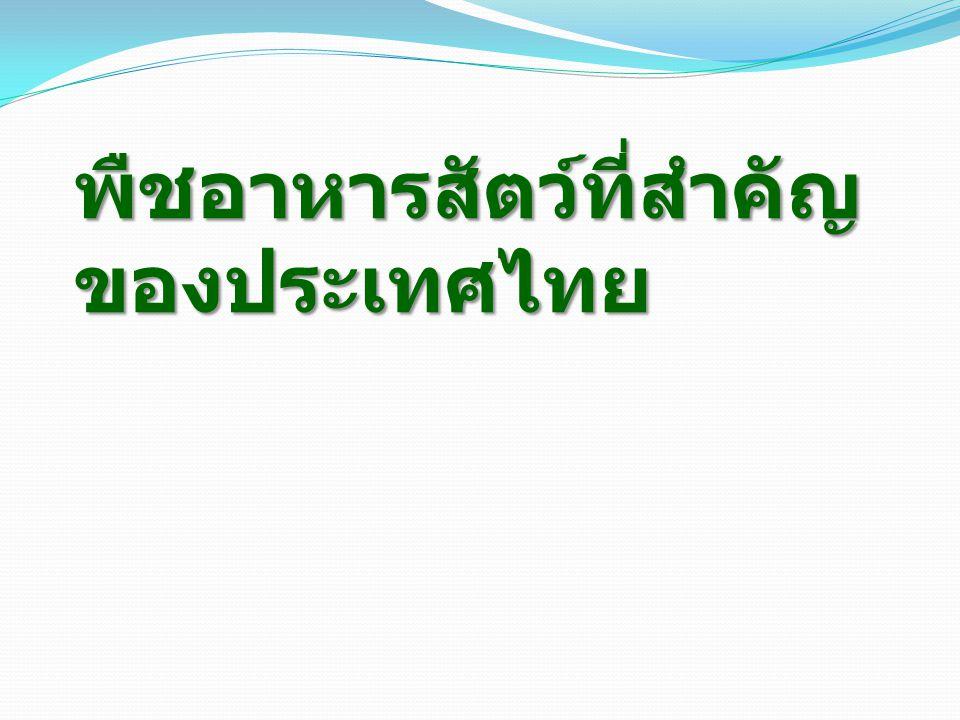 พืชอาหารสัตว์ที่สำคัญของประเทศไทย