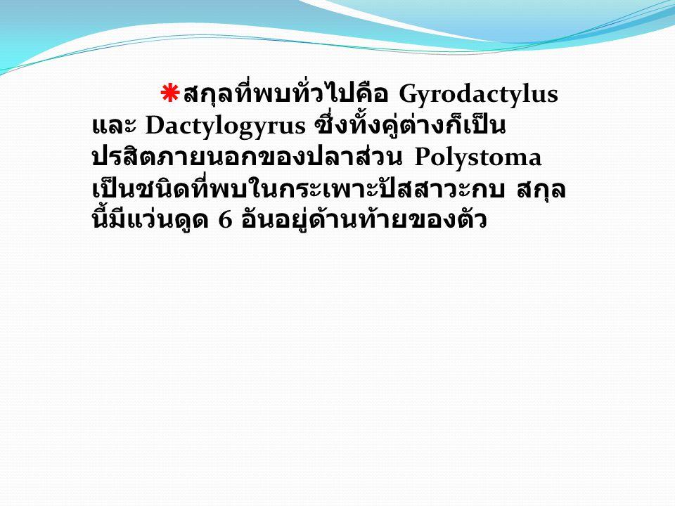 สกุลที่พบทั่วไปคือ Gyrodactylus และ Dactylogyrus ซึ่งทั้งคู่ต่างก็เป็นปรสิตภายนอกของปลาส่วน Polystoma เป็นชนิดที่พบในกระเพาะปัสสาวะกบ สกุลนี้มีแว่นดูด 6 อันอยู่ด้านท้ายของตัว