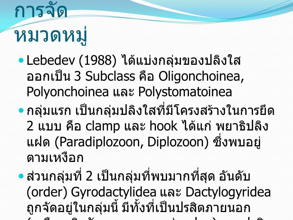 การจัดหมวดหมู่ Lebedev (1988) ได้แบ่งกลุ่มของปลิงใสออกเป็น 3 Subclass คือ Oligonchoinea, Polyonchoinea และ Polystomatoinea.