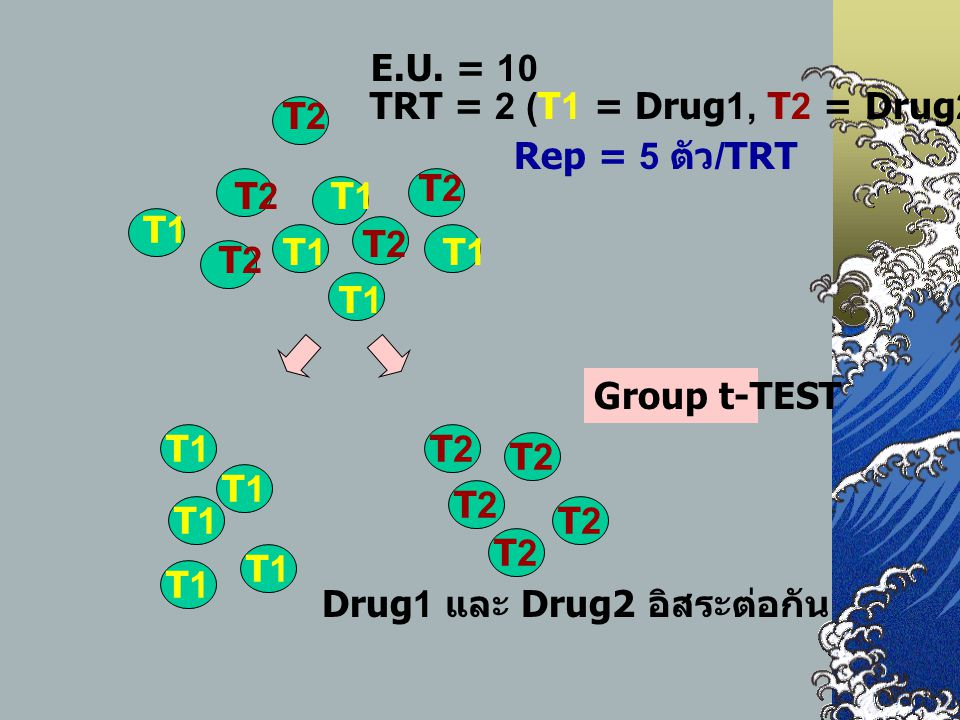 E.U. = 10 TRT = 2 (T1 = Drug1, T2 = Drug2) T1. T2.