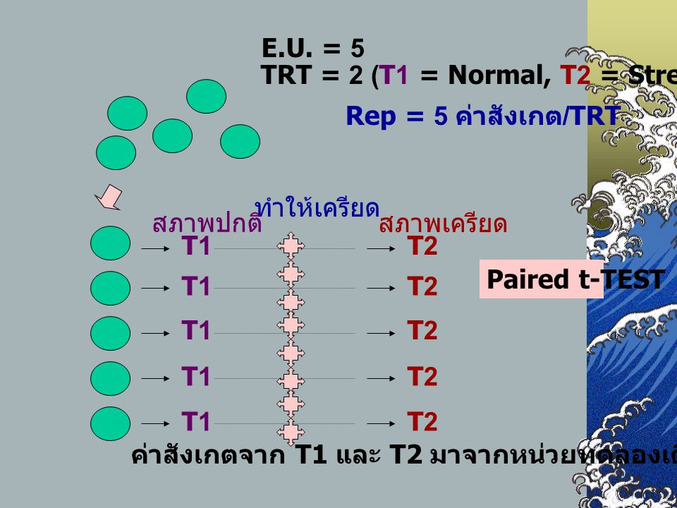 E.U. = 5 TRT = 2 (T1 = Normal, T2 = Stress) Rep = 5 ค่าสังเกต/TRT. ทำให้เครียด. T1. สภาพปกติ T2.