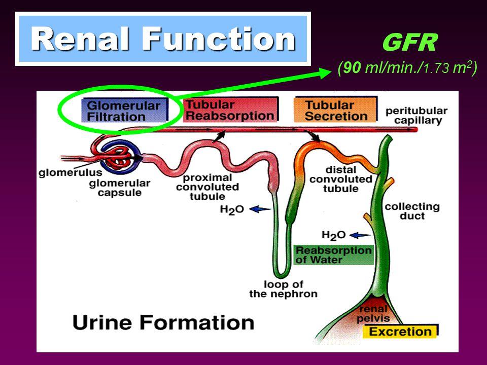 Renal Function GFR (90 ml/min./1.73 m2)