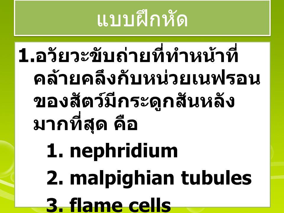 แบบฝึกหัด อวัยวะขับถ่ายที่ทำหน้าที่คล้ายคลึงกับหน่วยเนฟรอนของสัตว์มีกระดูกสันหลังมากที่สุด คือ. 1. nephridium.