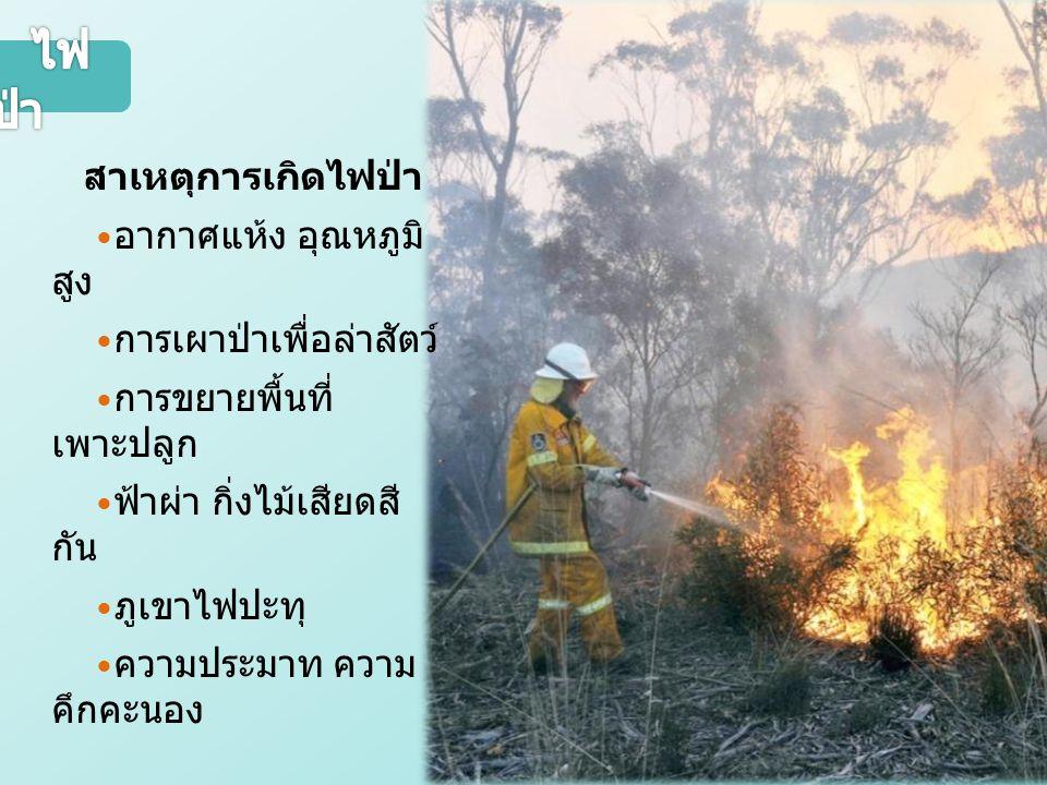 ไฟป่า  อากาศแห้ง อุณหภูมิสูง  การเผาป่าเพื่อล่าสัตว์