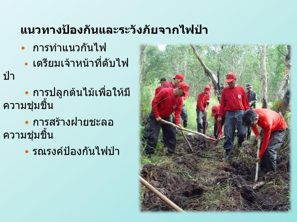 แนวทางป้องกันและระวังภัยจากไฟป่า