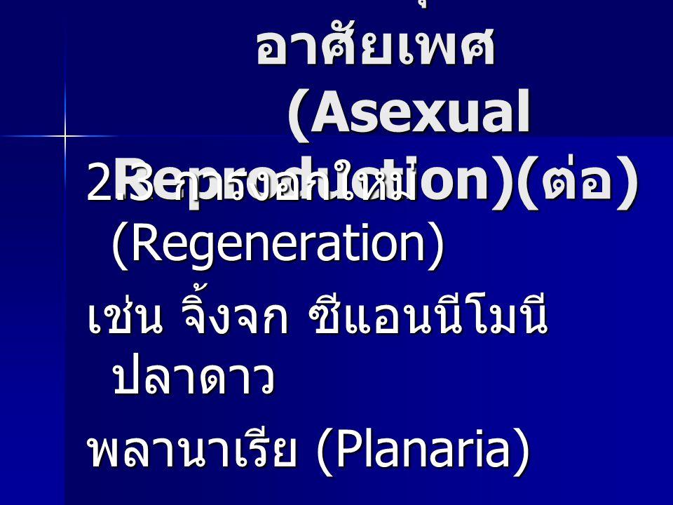 การสืบพันธุ์แบบไม่อาศัยเพศ (Asexual Reproduction)(ต่อ)