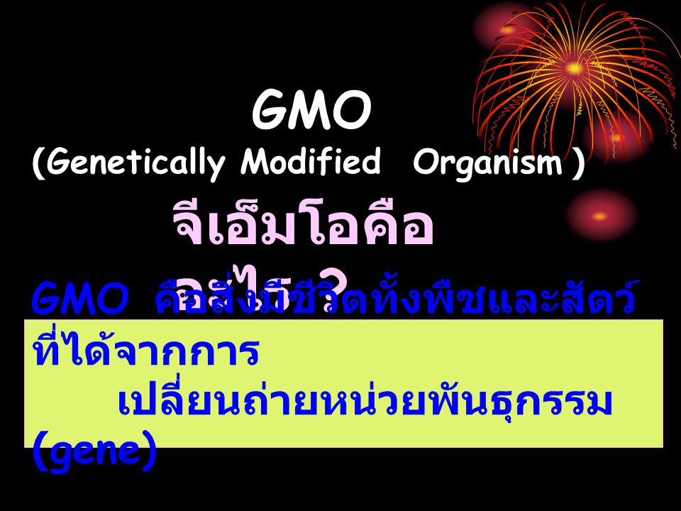 จีเอ็มโอคืออะไร GMO GMO คือสิ่งมีชีวิตทั้งพืชและสัตว์ ที่ได้จากการ
