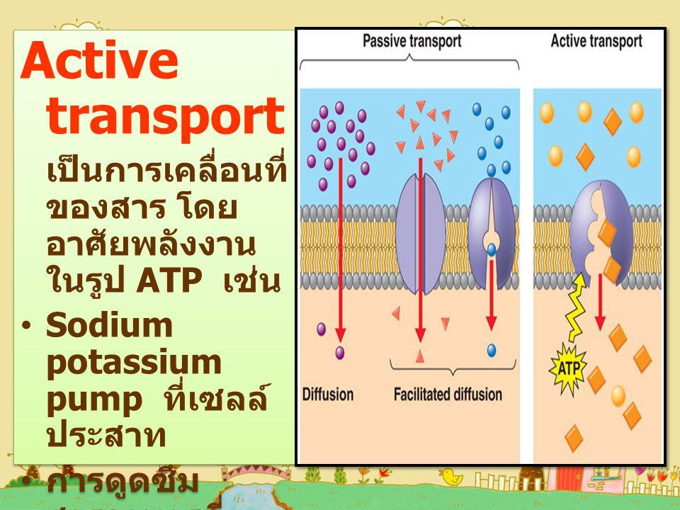 Active transport Sodium potassium pump ที่เซลล์ประสาท