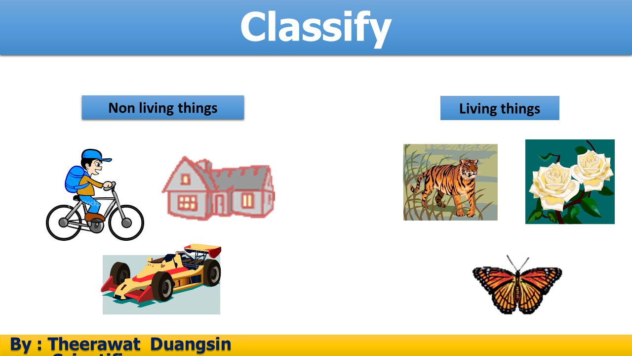 Classify By : Theerawat Duangsin Scientific process Non living things