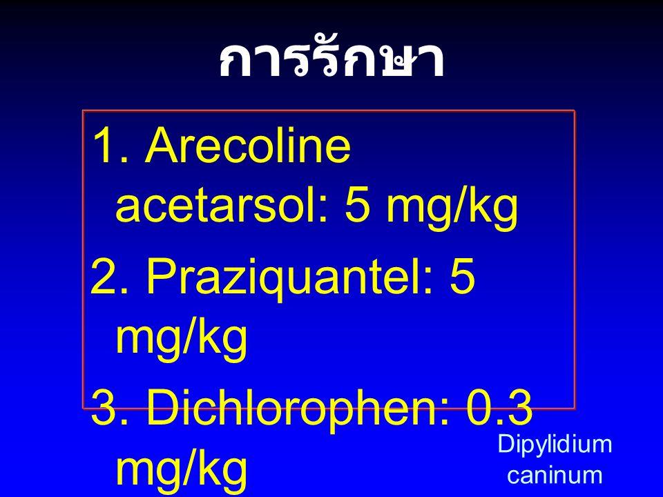 การรักษา 1. Arecoline acetarsol: 5 mg/kg 2. Praziquantel: 5 mg/kg