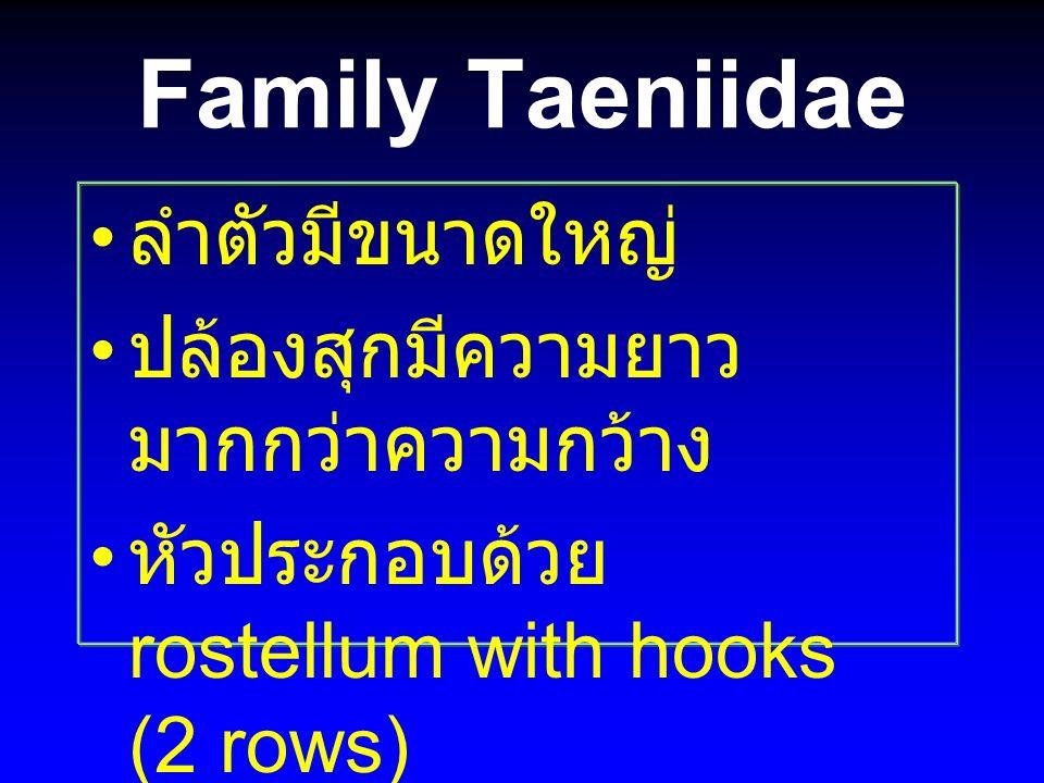 Family Taeniidae ลำตัวมีขนาดใหญ่ ปล้องสุกมีความยาวมากกว่าความกว้าง