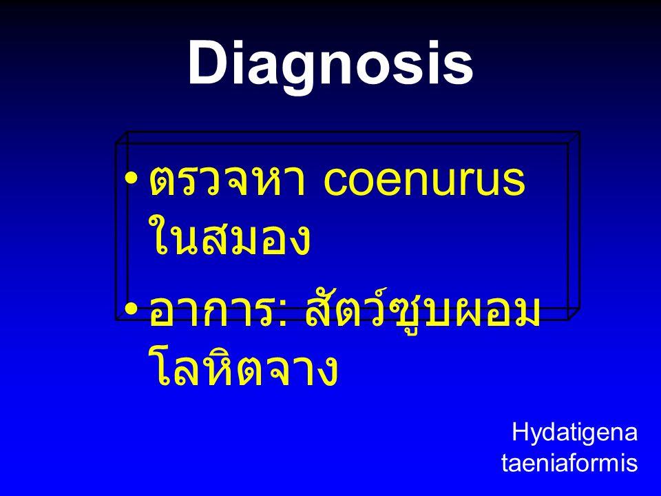 Diagnosis ตรวจหา coenurus ในสมอง อาการ: สัตว์ซูบผอม โลหิตจาง