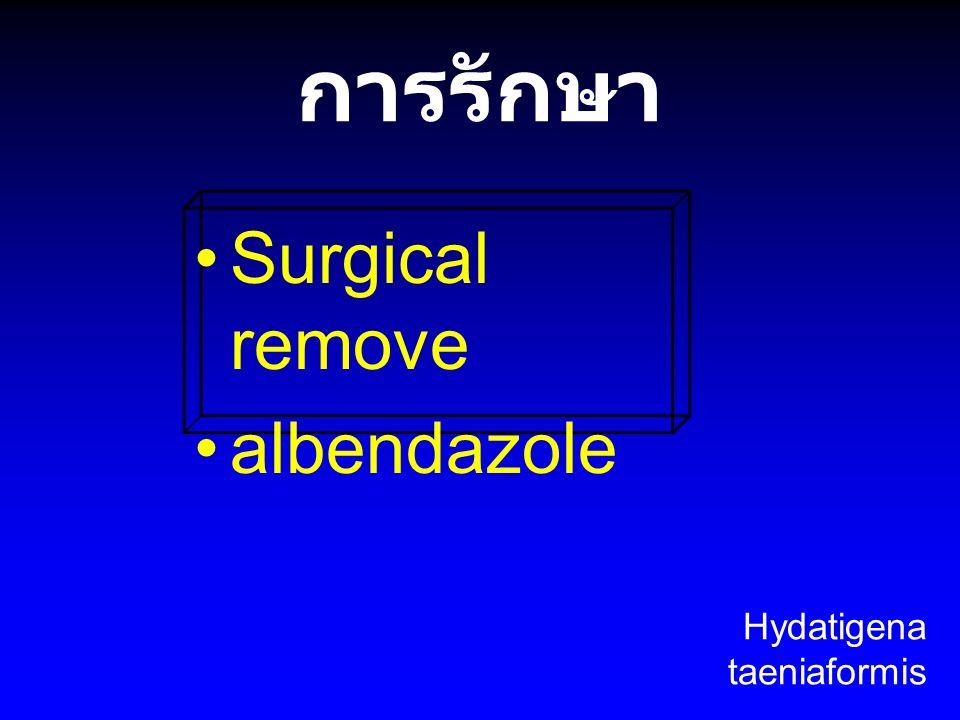 การรักษา Surgical remove albendazole Hydatigena taeniaformis
