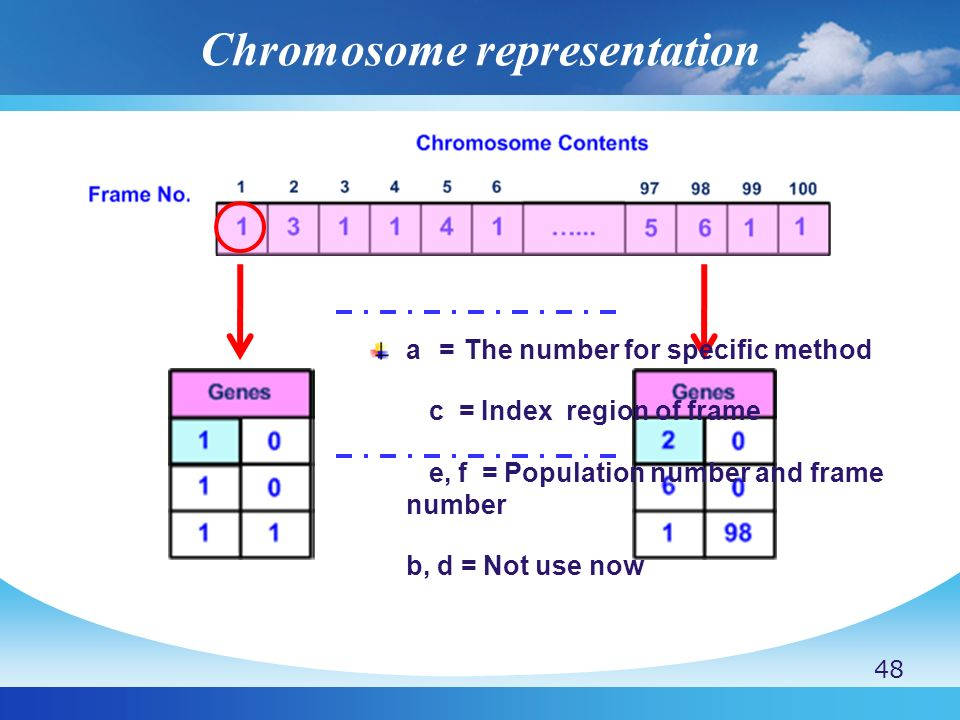 Chromosome representation