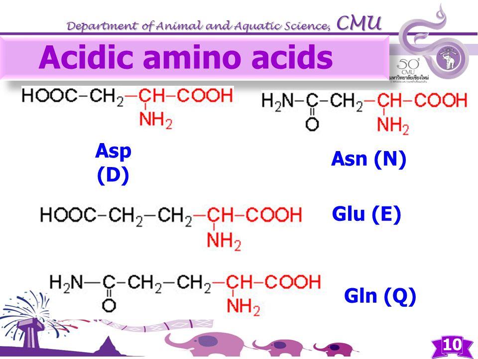 Acidic amino acids Asp (D) Gln (Q) Asn (N) Glu (E)