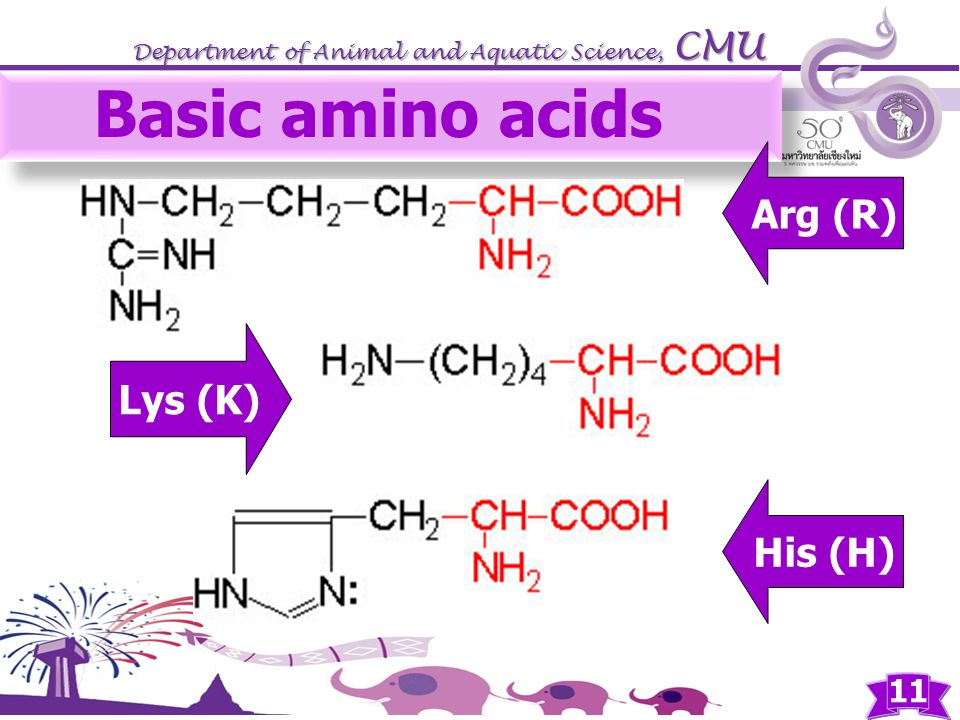 Basic amino acids Arg (R) Lys (K) His (H)