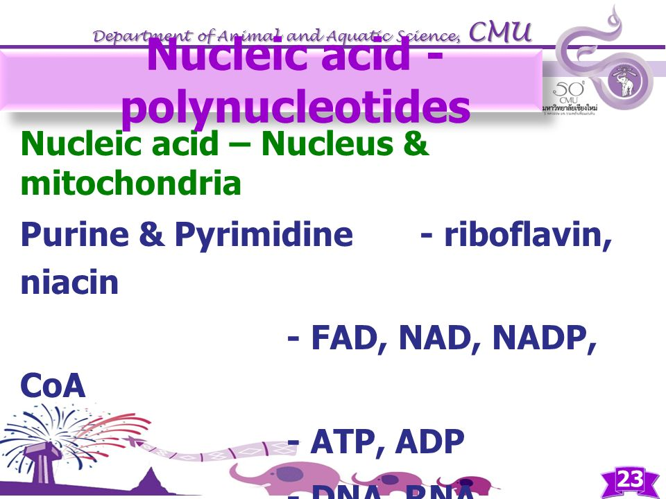 Nucleic acid - polynucleotides